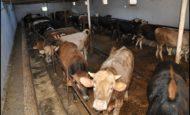 Mersin Yaylada Çiftlikte Çalışacak Aile Aranıyor