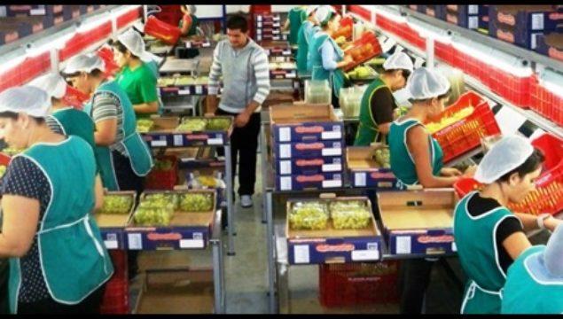 Antalya Sebze Meyve Paketleme işinde Çalışacak Aile Veya Bay Bayan Personel